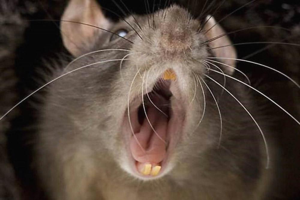 chống chuột trên xe ô tô 2